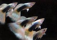 straipsniai apie akvariumus