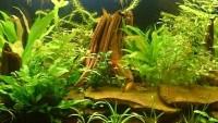 Akvariumo parinkimas ir suderinamumas