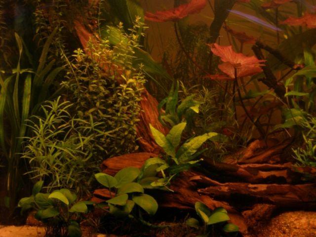 Gintaro A. (Piktas) akvariumas