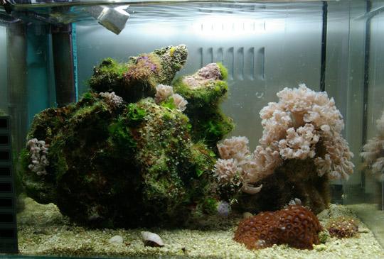 Dainiaus K akvariumas