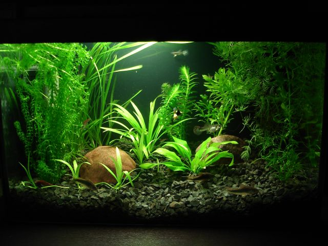 Raimundo B. 25ltr. akvariumas