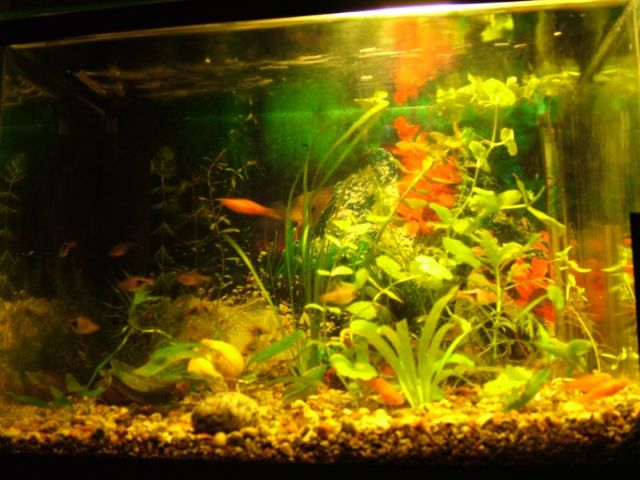 Lino G. akvariumas