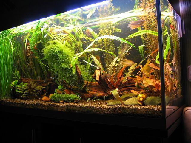 Tomo Š. (samasas) akvariumas