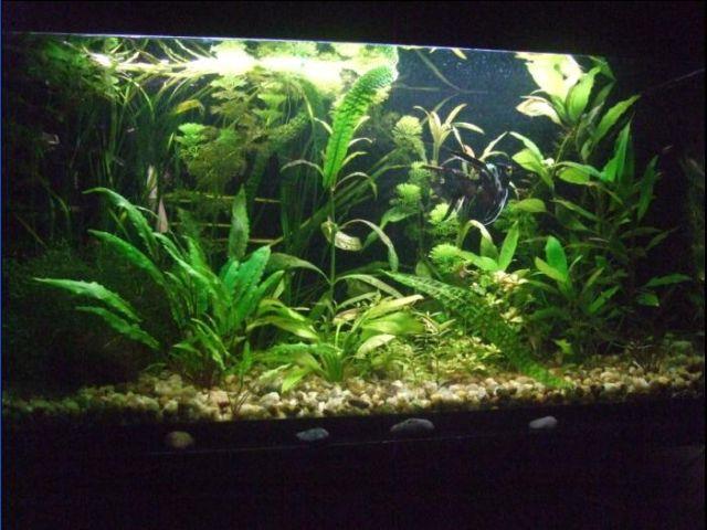 Justo J. (coopeez) akvariumas