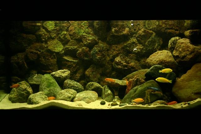 Manto M. (makalas) akvariumas